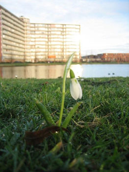Lente in Papendrecht?